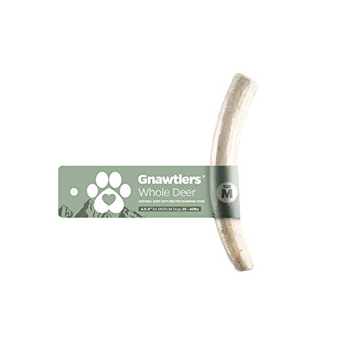 Gnawtlers - Premium Deer Antlers for Dogs, Naturally Shed Deer Antlers, All Natural Deer Antler Dog Chew, Specially Selected from The Heartland Regions (Medium)