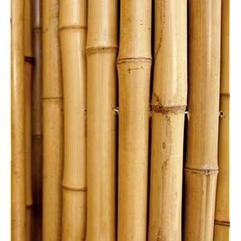 Vendita canne di bambù