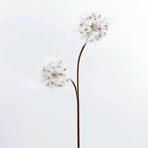 artplants.de Soffione tarassaco Ornamentale Theresia, 2 infiorescenze Bianche, 85cm - Dente di Leone/Fiore Artificiale