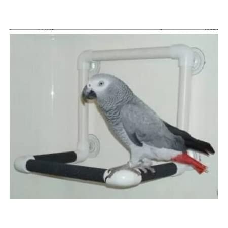 Hypeety Bird Parrot Stand Perch Shower Standing Toy Portable Suction Cup Parrot Shower Perch Bath Stands Suppllies Holder Platform Parakeet Finch Window Sturdy Hanging Play SMALL