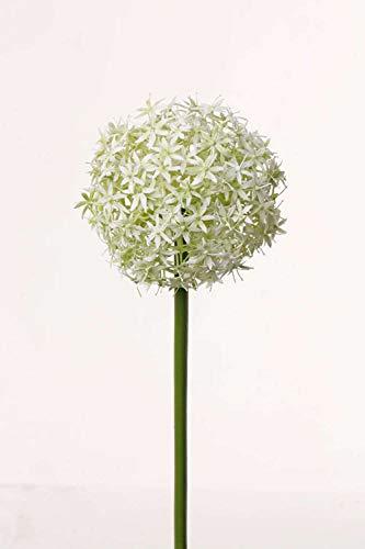 PARC Network - Kunst Allium Blüte, Creme, 75cm, Ø 12cm - Zierlauch Deko - Kunstblume - Blumenlauch Künstlich - Kunststoff Zierlauch-Pflanze