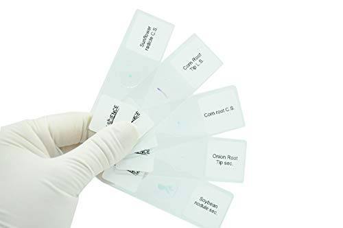 Prepared Plant Root & Root Metamorphosis Microscope Slides for Kids Students Biology Science Education, Pack of 5pcs Specimens by DIY-SCIENCE