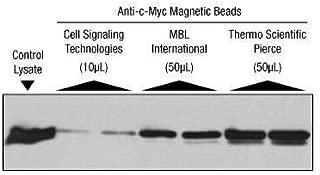 88843 - Pierce Anti-c-Myc Magnetic Beads, Thermo Scientific - Anti-c-Myc Magnetic Beads - Each (5ml)