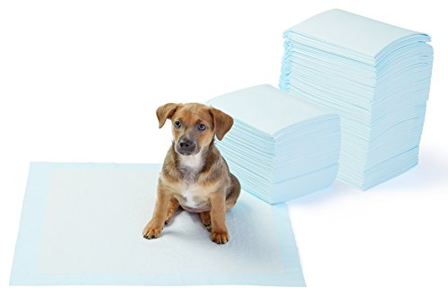 AmazonBasics Dog and Puppy Pee, Potty Training Pads, Regular (22 x 22 Inches) - Pack of 150