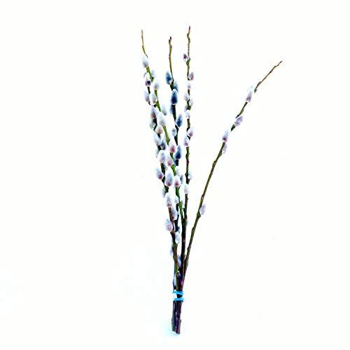 Palm Gattino rami decorazione: Pasqua Decorazione vaso–salweide rami–Grande Bund rami–Primavera di decorazione (20rami di primavera, ca. 40cm)