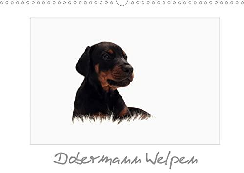 Dobermann Welpen (Wandkalender 2022 DIN A3 quer)