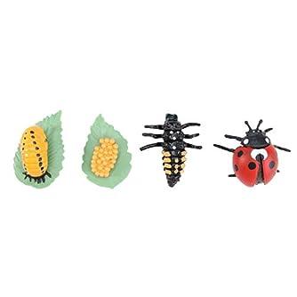 TOYANDONA 昆虫のライフサイクルフィギュアリアルな昆虫フィギュアおもちゃは、子供のバグのための動物科学の茎のおもちゃの変態を示しています