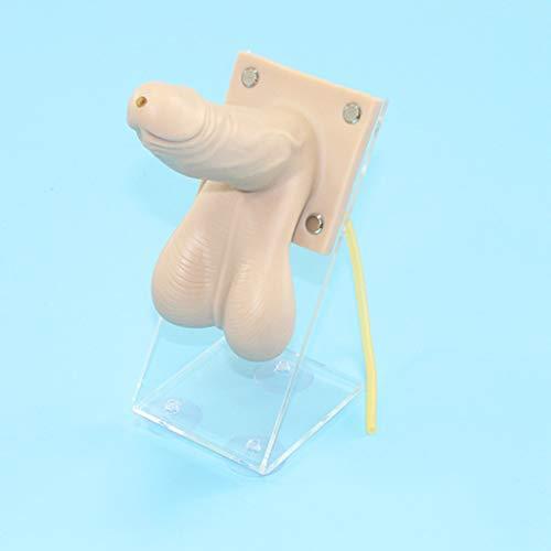 Huili Kondom-Practice-Modell - PVC-Material männlich Kondom Manikin Lehre Modell Medical Traning Modell - für Medical School Student Practice-Modell