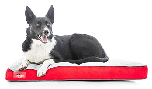 best chew resistant dog bed