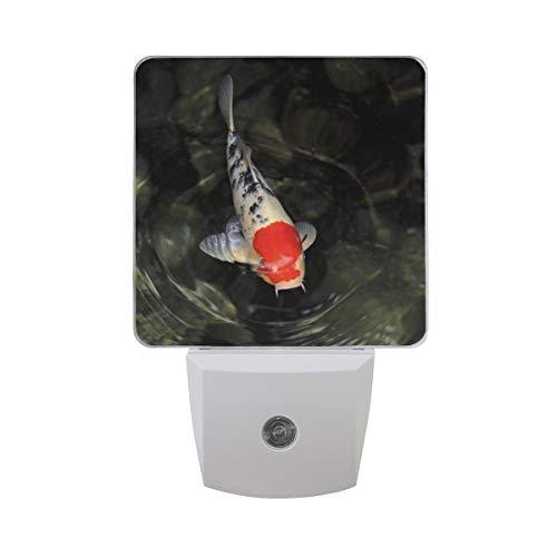 AOTISO Einzelne rote weiße und schwarze Koi-Fische, die im dunkelgrünen Wasser schwimmen Auto-Sensor-Nachtlichtstecker im Innenbereich