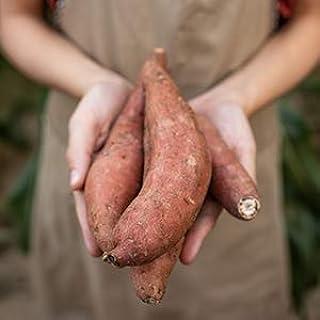 ORGANIC Potato Sweet 1kg (Upon Availability)