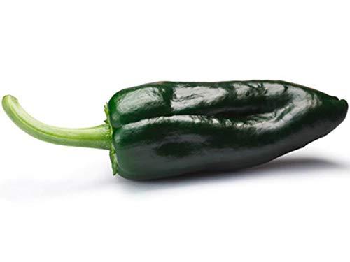 Ancho Poblano Pepper - 60 Seeds (1/2 Gram) - Buy 2 Get 1 Free - bin60