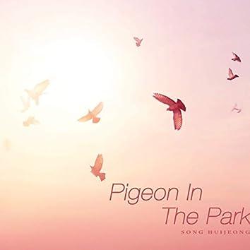 공원의 비둘기