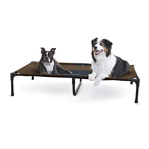 Best Elevated Cots for Dogs