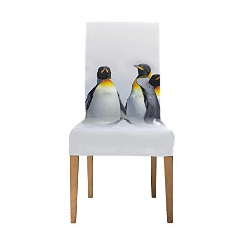 Esszimmerstuhl Sitzbezüge Gruppe King Penguins White Habitat Große Abdeckung für Stuhl Weiche Stretch-Stretch-Stuhlbezüge Für Wohnzimmer Waschbar Abnehmbare Rückenlehne Esszimmerstuhlbezüge Für Esszi