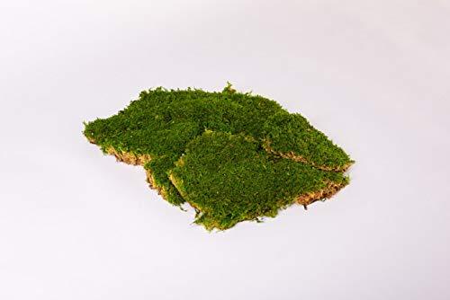 Premium Flachmoos Moosplatten konserviert ausgesuchtes echtes haltbares echtes Moos für die Dekoration kaufen Prime Osterdeko Moss Deko Dekoration für Gestecke Frühlingsdeko Moosbilder