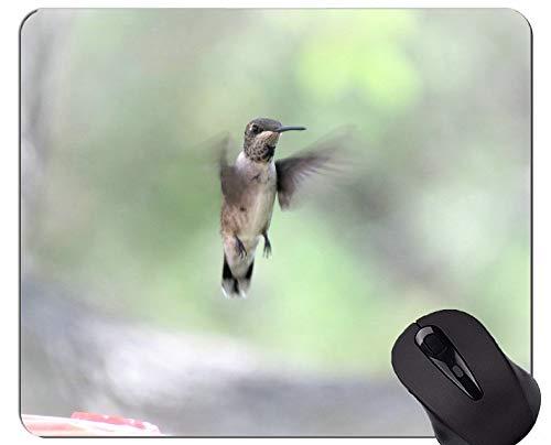 Spiel-Mausunterlage Gewohnheit, im Flug Kolibriwild lebende tiere Spiel-Mausunterlagen
