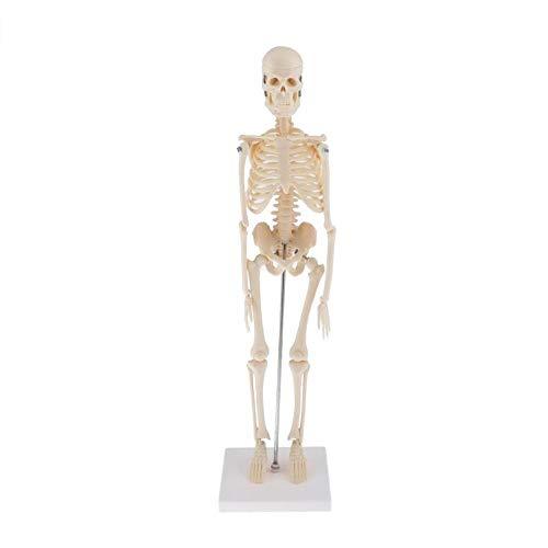 JAP768 1 stück menschliche anatomische anatomie Skeleton Dekoration Modell Skelett Knochen medizinisch lernenhilfe, kunstskizze, Puppe, chiren Spielzeug