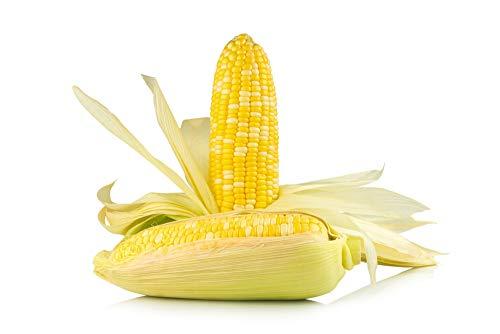 Ambrosia Hybrid Sweet Corn, 50 Seeds Per Packet, Non GMO Seeds, Botanical Name: Zea mays, Isla