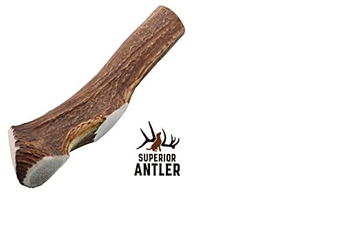 1-GIANT-JUMBO Whole Elk Antler for Dogs –XXXL All Natural premium Grade A. Antler Chew. Naturally Shed, Hand-picked, and made in the USA. NO ODOR, NO MESS. GUARANTEED SATISFACTION. For dogs 60-90+ Lbs