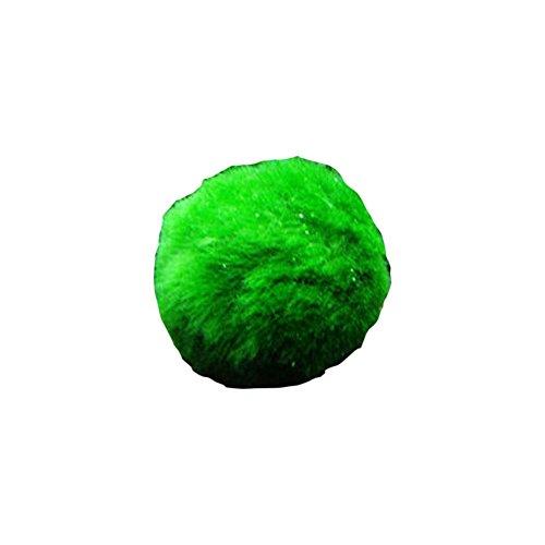 Abilee - Palla di muschio di marimo, lumache che giocano per la crescita delle alghe, decorazione per acquari e paesaggi
