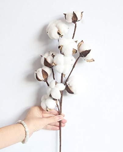 pah-macy Ramo de Flores Secas Naturales Ramas Algodon Artificial Flor de Algodon Seca Blanco Flores Hogar Bodas Fiestas Cocina Escritorio Restaurante-10 Ramas de algodón 3_Paquete de Flores secas