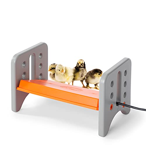 K&H PET PRODUCTS 100213615 Thermo-Poultry Brooder for Newly Hatched Chicks and Ducklings, Small 8 X 13.5 X 8 Inches, Gray/Orange