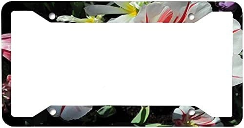 DKISEE Max 74% OFF License Plate Frame Stainless Red White Steel ...