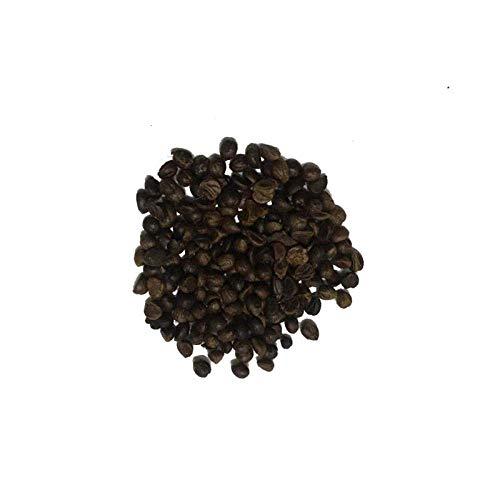 Parthenocissus graine graine plante grimpante quatre saisons Parthenocissus semis intérieur petite feuille trois feuilles extérieur feuille rouge en pot 500 pièces