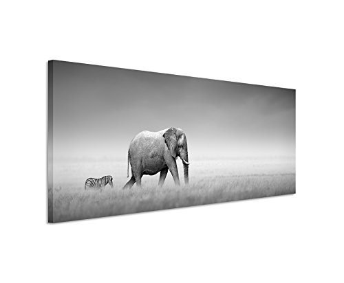 Paul Sinus Art Panoramabild 150x50cm Tierfotografie – Elefant und Zebra auf Leinwand Exklusives Wandbild Moderne Fotografie für ihre Wand in vielen Größen