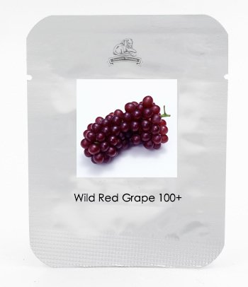 1 Paquet professionnel, 100 graines / paquet, Raisin sauvage Graines Hardy fruits sucrés plantules Plants # NF466