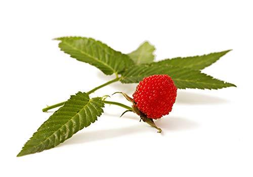 Wunderschöne Erdbeer-Himbeere 2 Stück (Rubus illecebrosus)