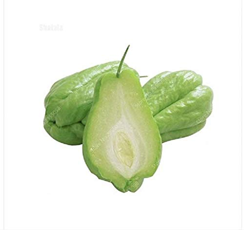 AGROBITS 30 Pcs/Bag Bonsai Chayote Seeds Outdoor Non-GMO Succulent Pumpkin Fruit Vegetab