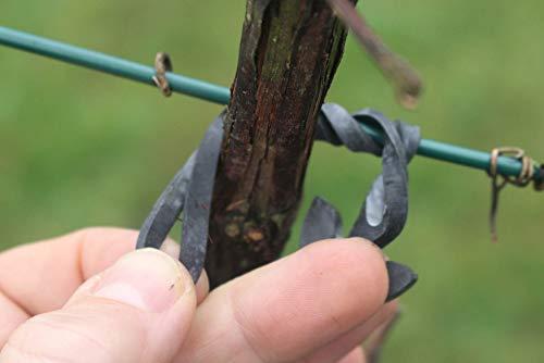 WoodBi Sicherer Baumbinder aus Gummi für alle Arten von Gehölzern Baumanbinder für Spaliere Baumschule (50, 110x4mm)