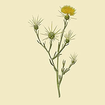 The Best of Star Thistle