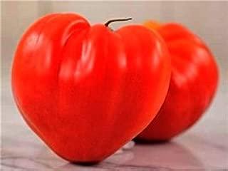 HeirloomSupplySuccess 10 Red Ox Heart Tomato Seeds