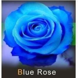 les colis noirs lcn Lot de 20 Graine Rose Rosier Bleu