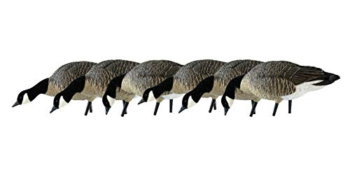 Avian-X Painted Feeder Lesser Goose Decoys 6 Pack