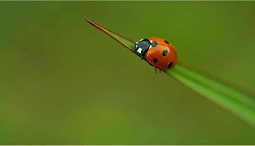 YHKTYV Insectos En Briznas De Hierba 200 Pcs DIY Rompecabezas De Madera Educational Game Grande Educativo El Alivio del Estrés Art Painting Puzzle Decoración