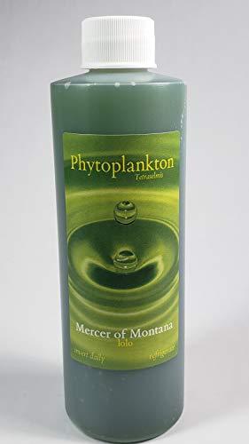 Live Marine Phytoplankton, Tetraselmis, 8oz. Bottle