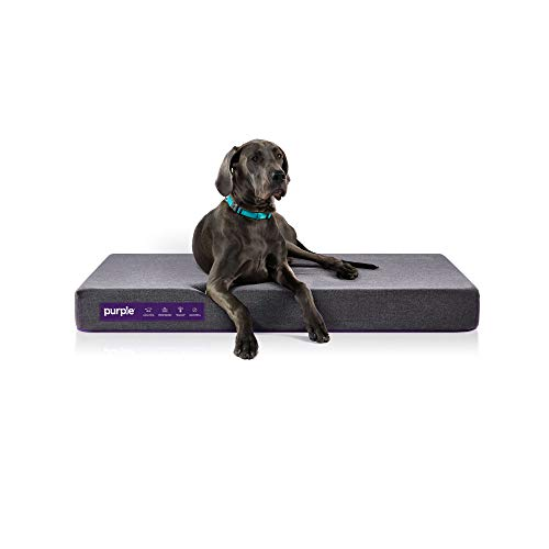 Purple Animal Bed for Dogs