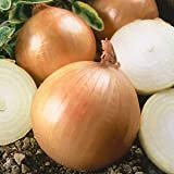 Sturon Onion Sets - 500g - Wholesale Bulk Fully <span class='highlight'><span class='highlight'>Certified</span></span> Professional Sets