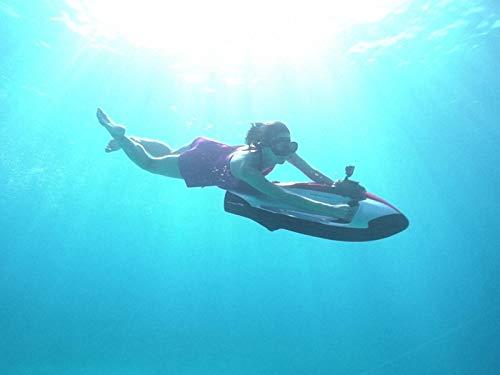 ハワイ#1 常夏のオアフ島でウミガメと泳ぐ