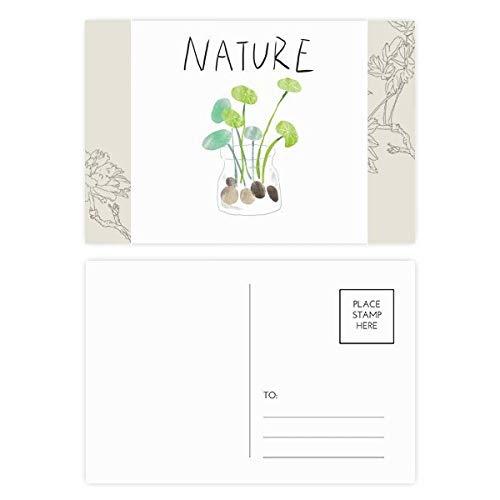 DIYthinker Natuurlijke Plant Soloisland Schilderij Bloem Postkaart Set Thanks Card Mailing Side 20 stks 5.7 inch x 3.8 inch Multi kleuren