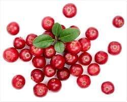 Inexpensive Saheb Vedic Cranberry Powder-100 2021 autumn and winter new Gram Orga Pure Pack Natural