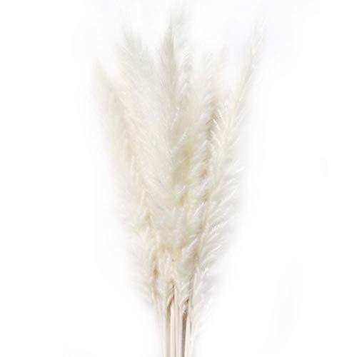 15 piezas de hierba de pampa pequeña seca natural, pluma de caña, phragmites communis, ramo de flores de boda, decoración para el hogar de 20 pulgadas de alto(white)