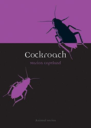 Cockroach (Animal)