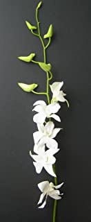 Fresh Flowers - 20 Long Stemmed White Dendrobium Orchids