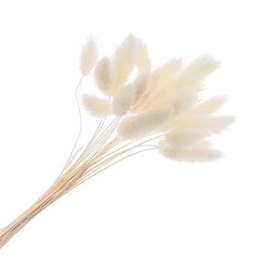 Rooteroy 20 pezzi colorati artificiali Uraria Picta in materiale naturale per piante erba, coniglietto code di fiori secchi Lagurus Ovatus (bianco)