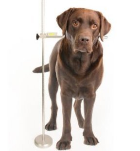 Show Tech Adjustable Dog Measure – Cronómetro ajustable de aluminio para la medición del perro
